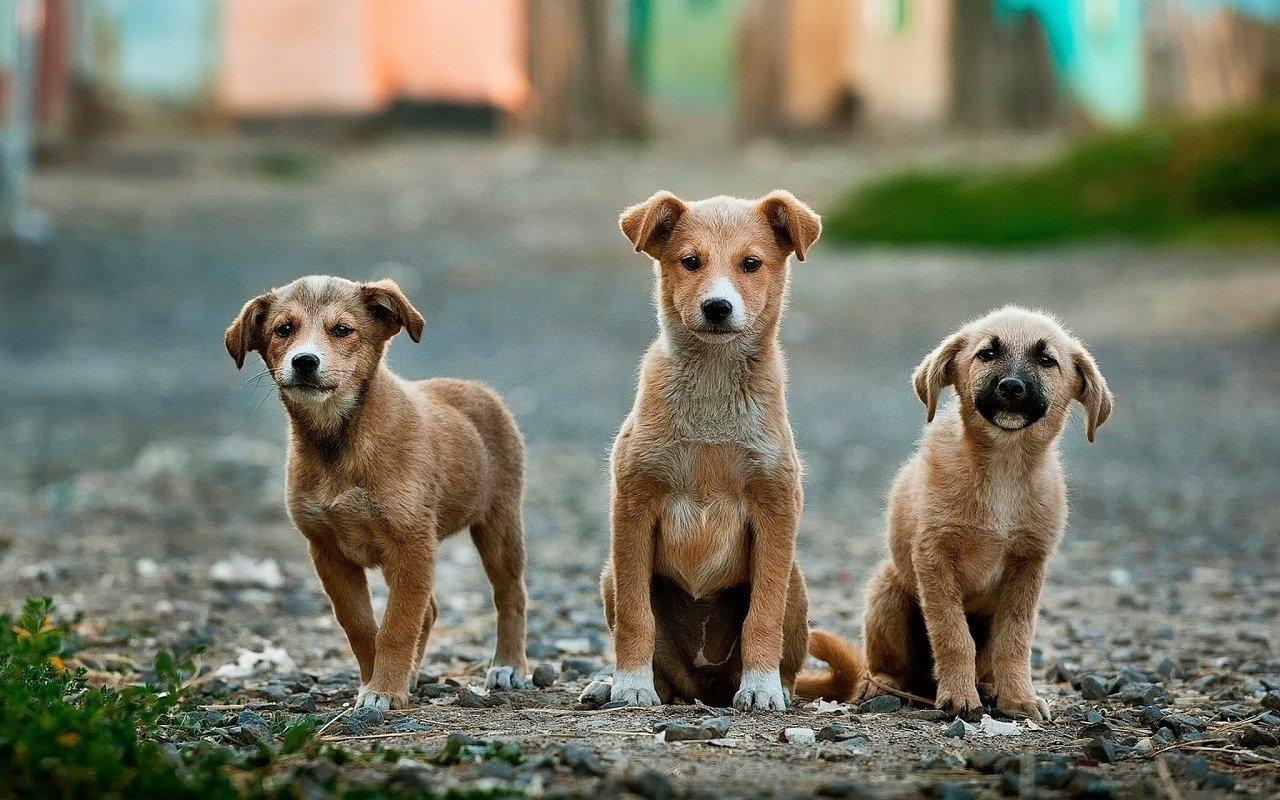 Sud corea pronta a vietare il consumo di cani