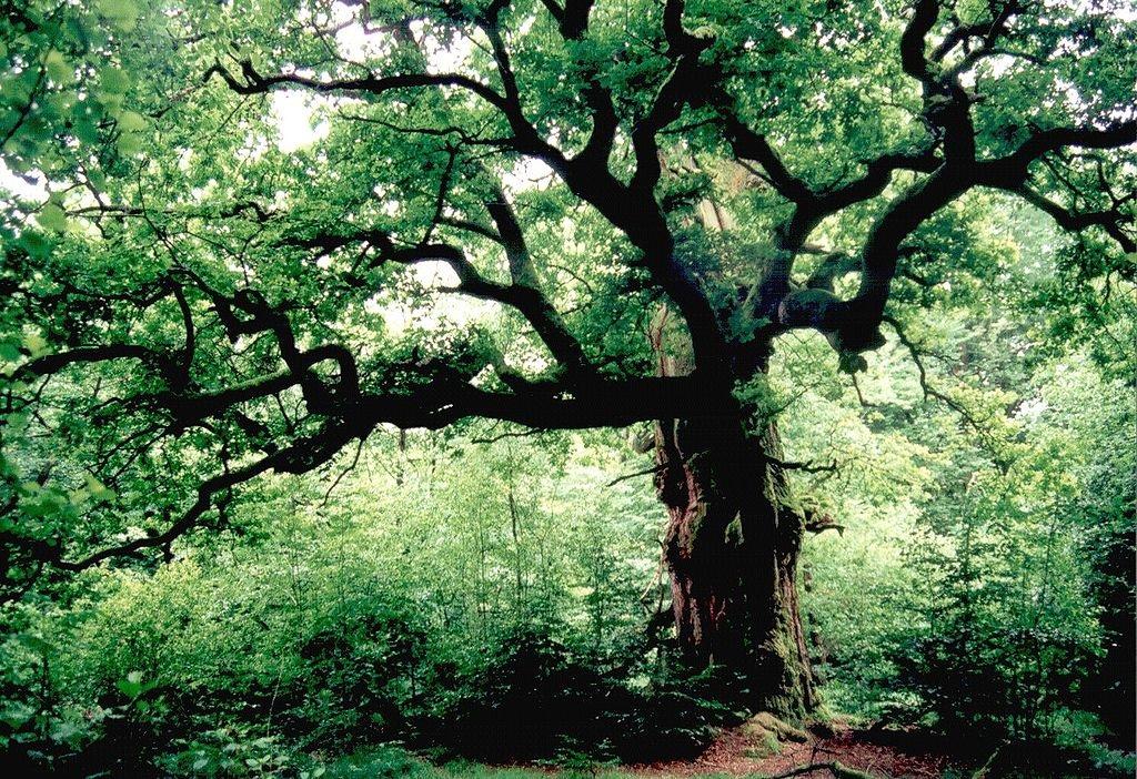 Germania, la foresta della Bella Addormentata minacciata